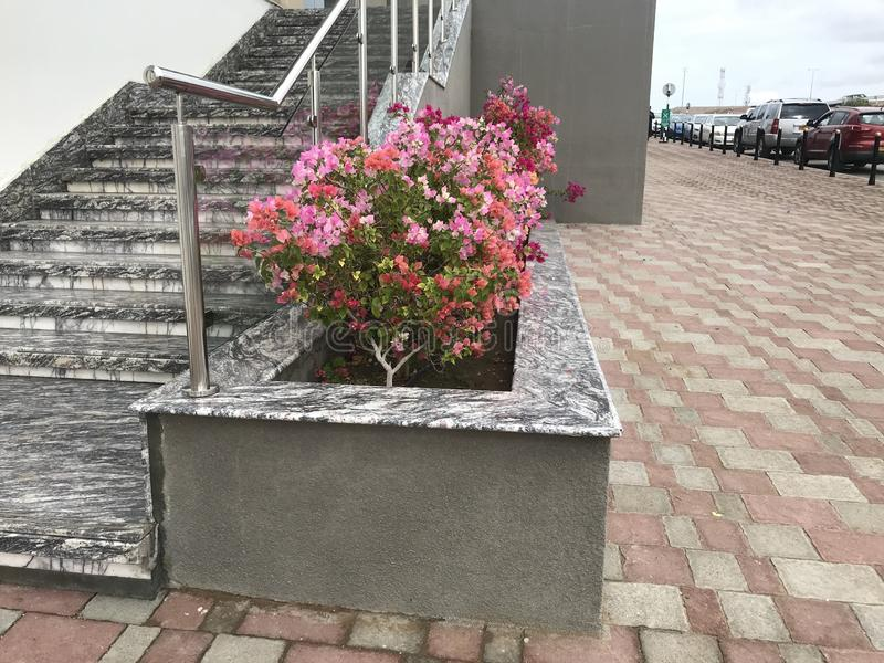 An Constructed concrete block work planter box with Beautiful plants and flowers near staircase entrance and stairs with Stainless royalty free stock photo