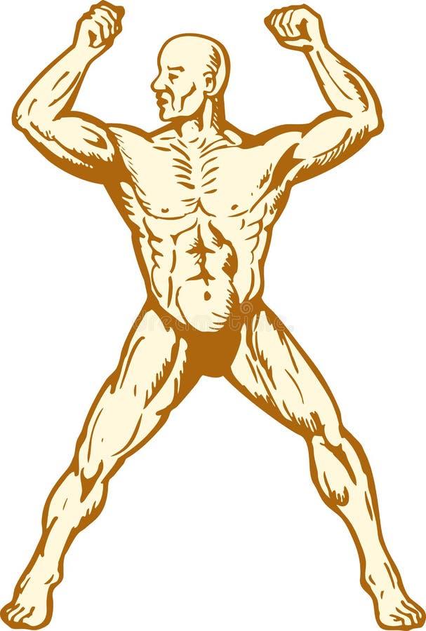 Constructeur de fuselage humain mâle d'anatomie fléchissant le muscle illustration de vecteur