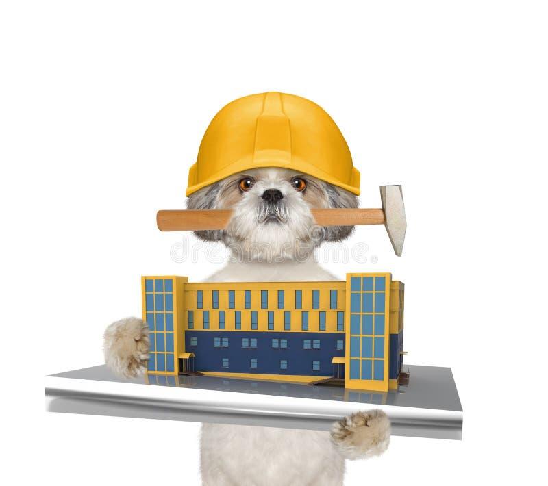 Constructeur mignon de chien tenant la construction de maison dans des ses pattes images libres de droits
