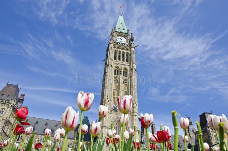 Construction Ottawa du Parlement et tulipes #2 photos libres de droits
