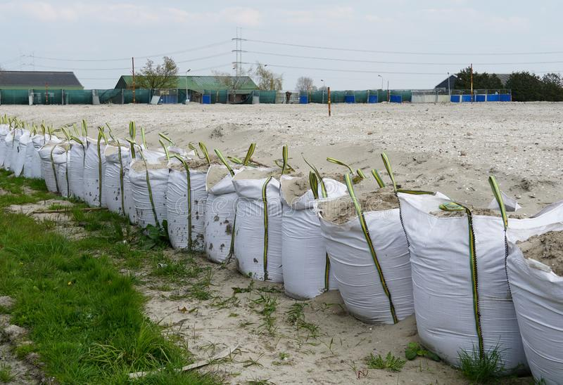 Construction site in the Netherlands. Several bags filled with sand on a construction site in the Netherlands. The purpose is to level and prepare the ground royalty free stock images