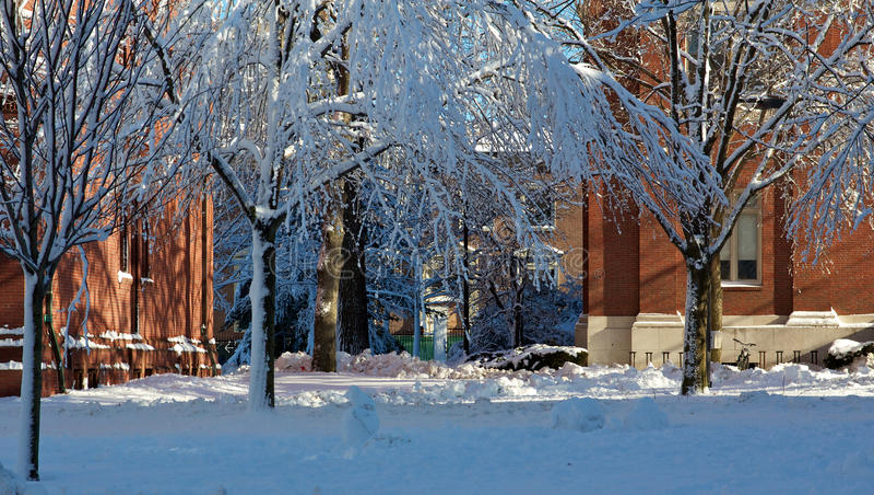 Constructions de dortoir à l'Université de Harvard en hiver photos stock