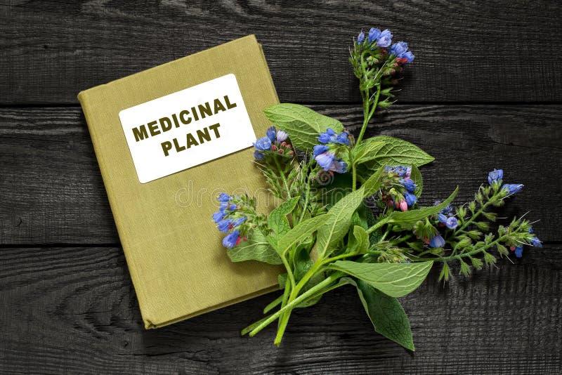 Consuelda de la planta medicinal y planta medicinal del directorio imagen de archivo libre de regalías