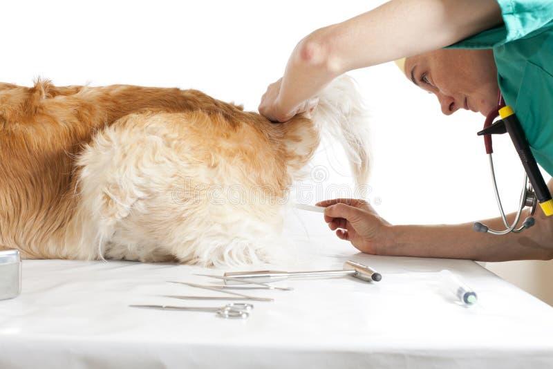 Consulta veterinaria imagen de archivo