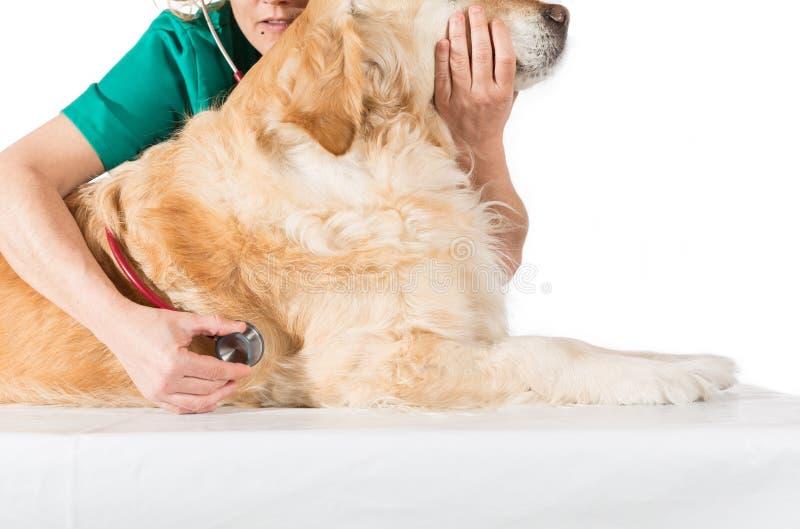 Consultation vétérinaire photographie stock