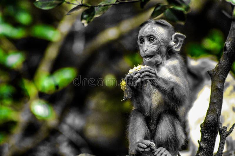 Consumición de expresiones del mono fotografía de archivo