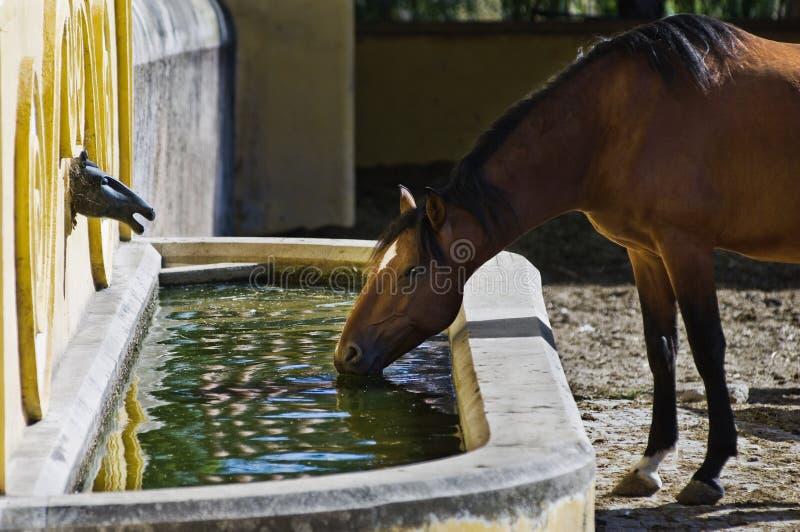 Consumición del caballo imágenes de archivo libres de regalías