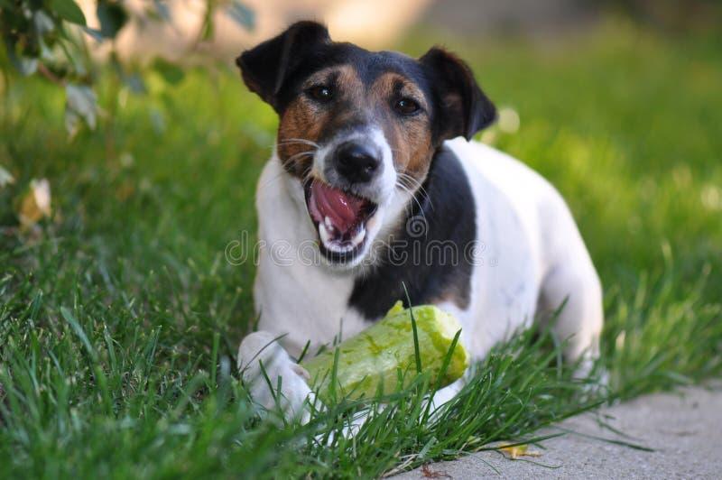 Consumición del perro imagen de archivo