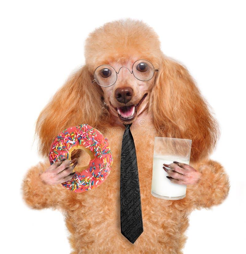 Consumición del perro imagen de archivo libre de regalías