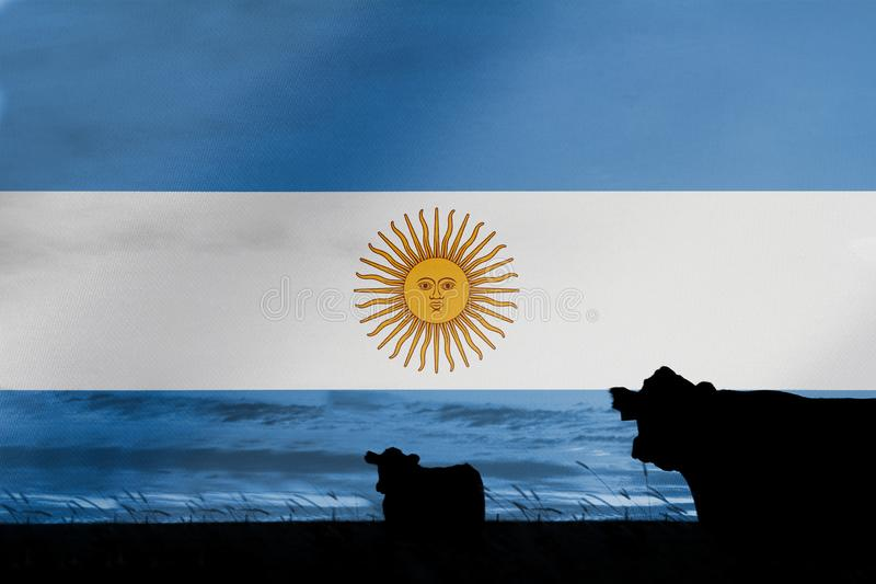 Consumption and production of cattle in countries with the flag of Argentina.  stock photo