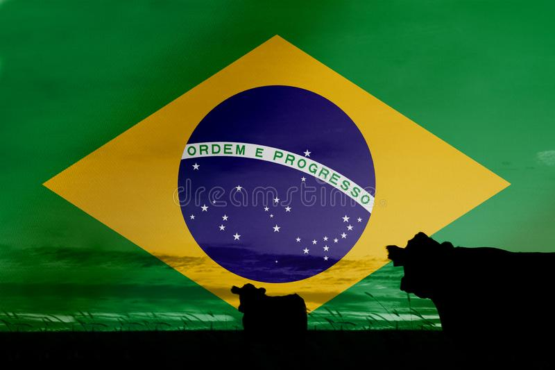 Consumption and production of cattle in countries with the flag of  Brazil.  royalty free stock photo