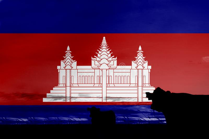 Consumption and production of cattle in countries with the flag of Cambodia.  stock illustration