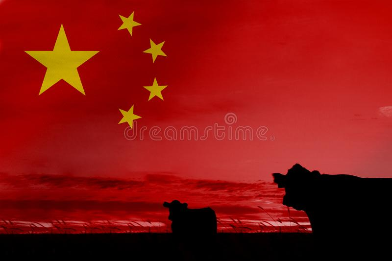 Consumption and production of cattle in countries with the flag of China.  royalty free stock images