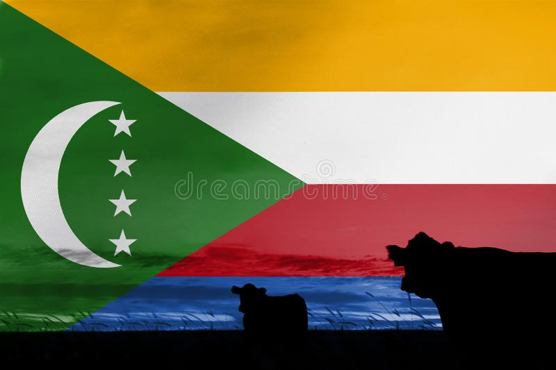Consumption and production of cattle in countries with the flag of Comoros.  royalty free stock photos