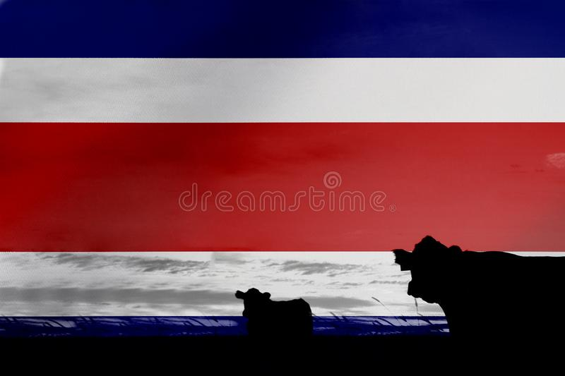 Consumption and production of cattle in countries with the flag of Costa Rica.  stock photo
