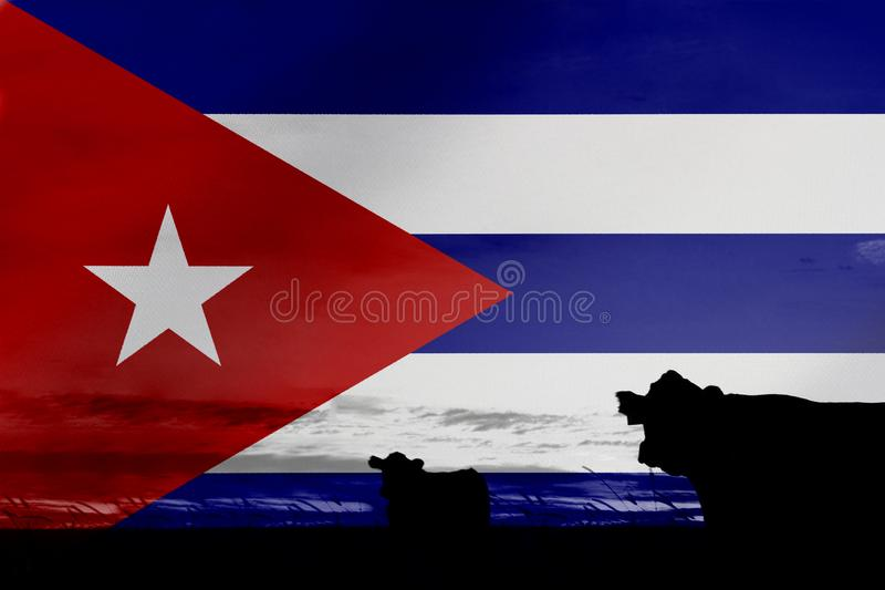 Consumption and production of cattle in countries with the flag of Cuba.  stock images