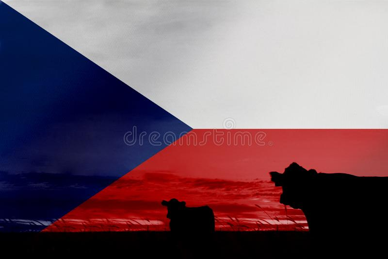 Consumption and production of cattle in countries with the flag of Czech Republic.  royalty free stock photography