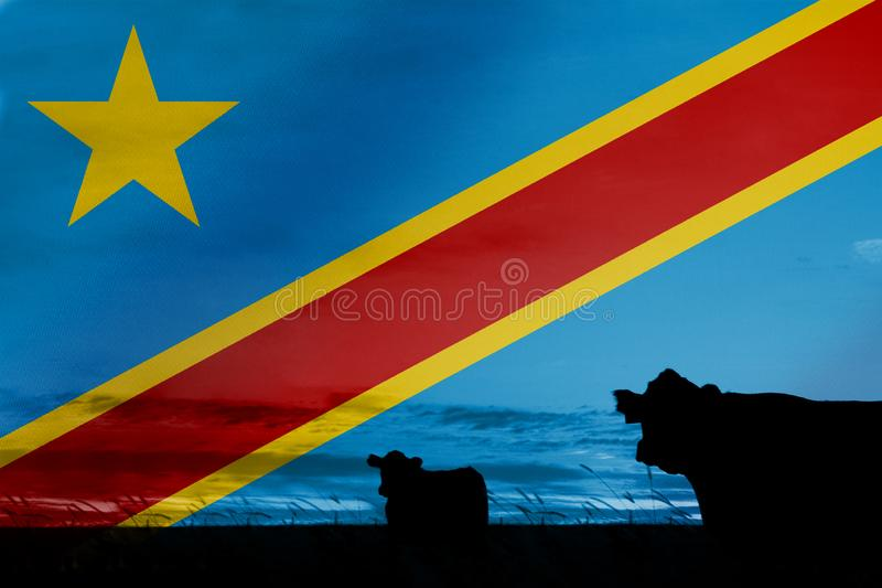 Consumption and production of cattle in countries with the flag of Democratic Republic of the Congo.  royalty free stock photography