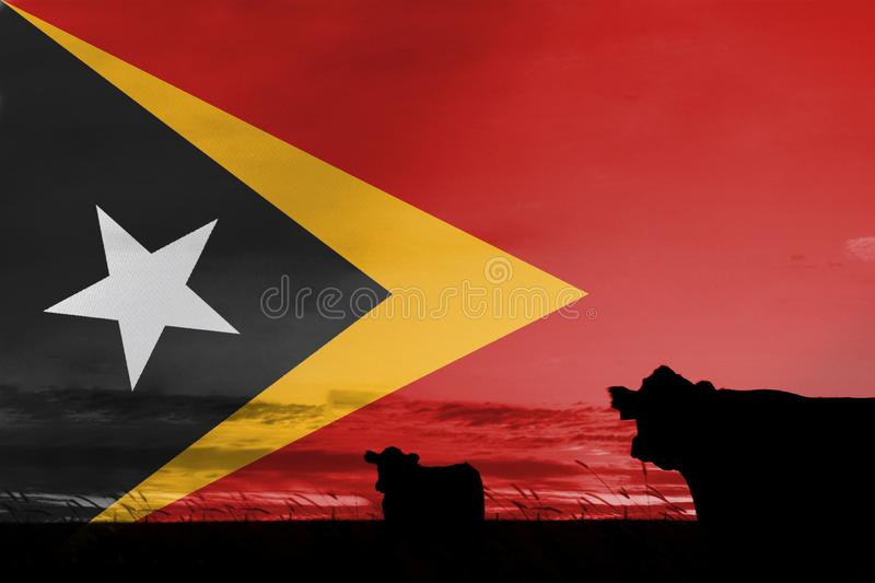 Consumption and production of cattle in countries with the flag of Democratic Republic of Timor Leste.  royalty free stock images