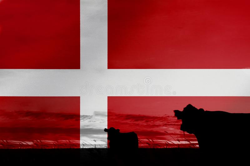 Consumption and production of cattle in countries with the flag of Denmark.  royalty free stock photo