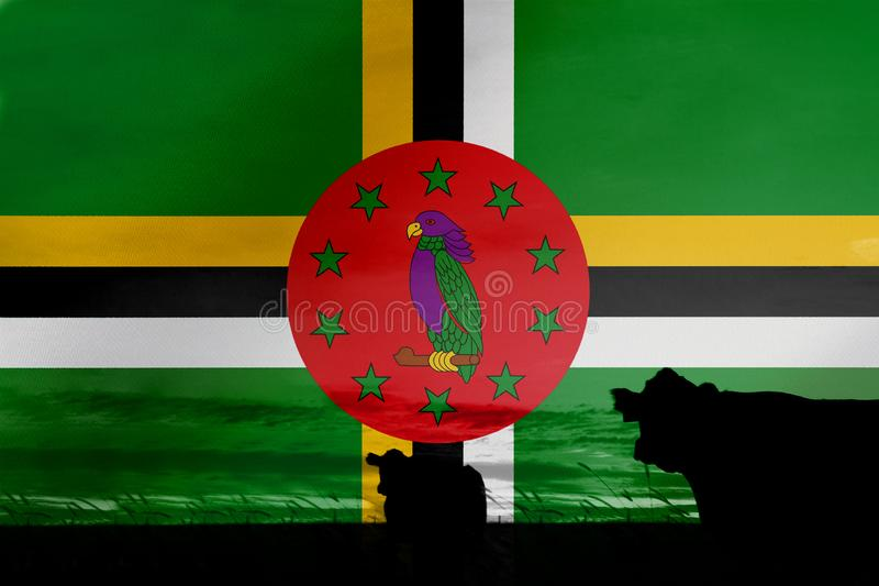 Consumption and production of cattle in countries with the flag of Dominica.  stock images