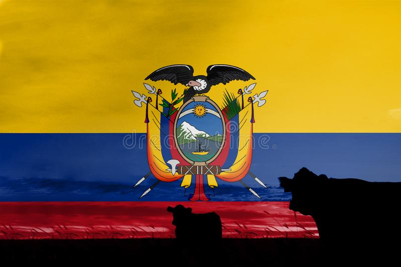 Consumption and production of cattle in countries with the flag of Ecuador.  royalty free stock image