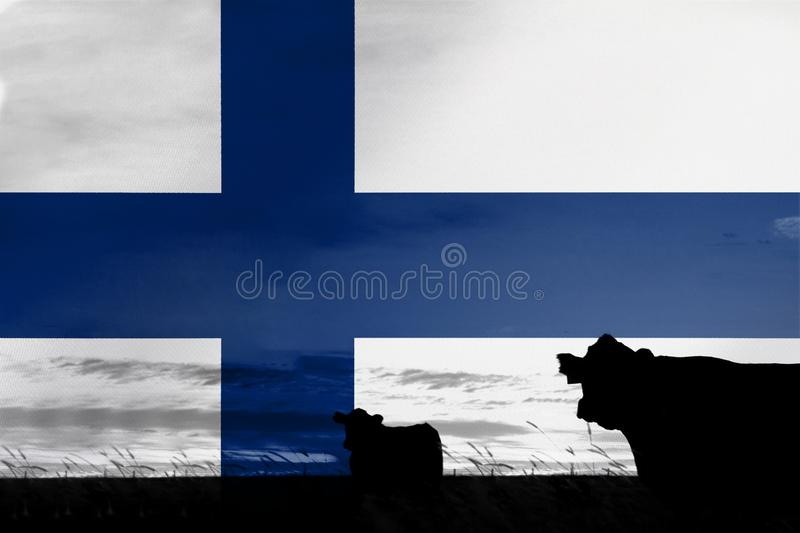 Consumption and production of cattle in countries with the flag of Finland.  royalty free stock image