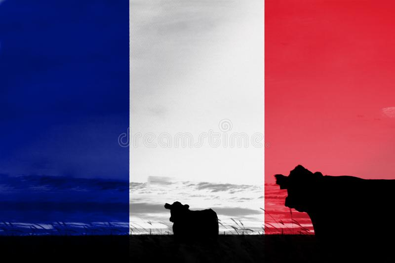 Consumption and production of cattle in countries with the flag of France.  stock illustration