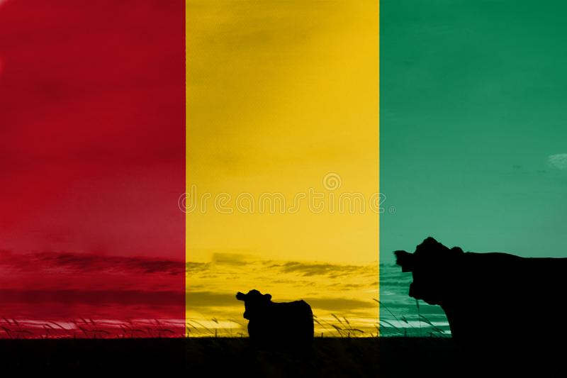 Consumption and production of cattle in countries with the flag of Gabon.  royalty free stock photo