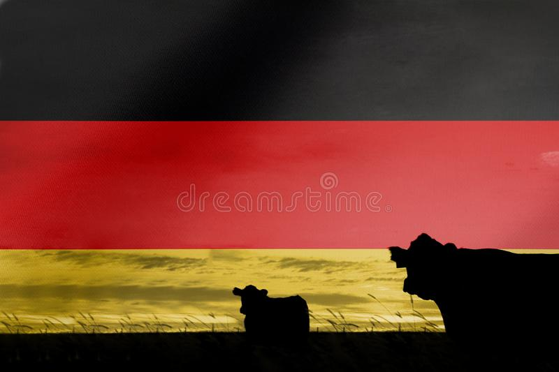 Consumption and production of cattle in countries with the flag of Germany.  stock photography
