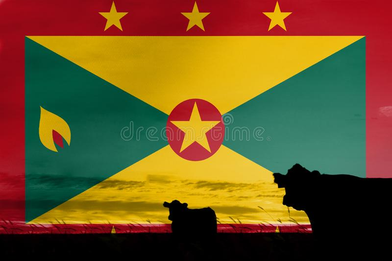 Consumption and production of cattle in countries with the flag of Grenada.  stock illustration