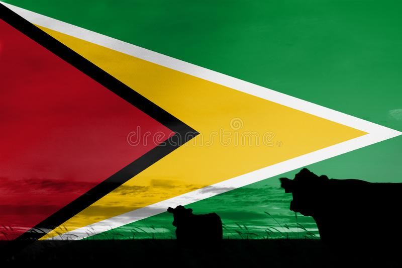 Consumption and production of cattle in countries with the flag of Guyana.  stock photography