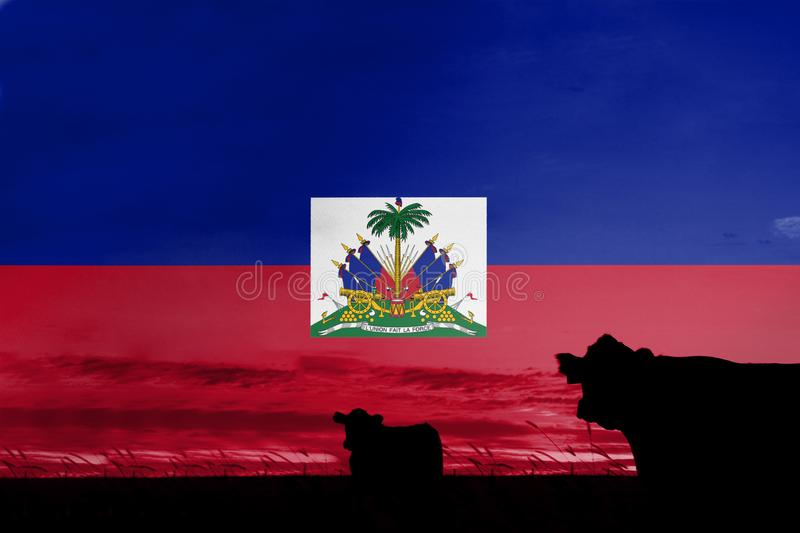 Consumption and production of cattle in countries with the flag of Haiti.  royalty free illustration