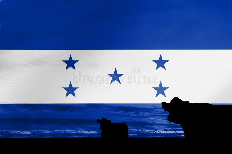 Consumption and production of cattle in countries with the flag of Honduras.  royalty free stock photos