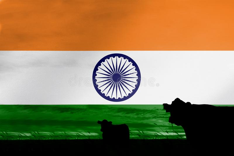 Consumption and production of cattle in countries with the flag of  India.  royalty free stock photo