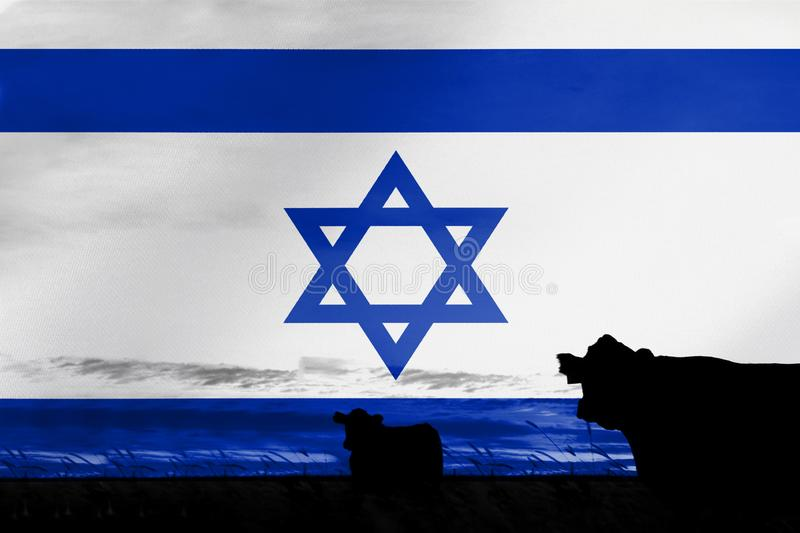 Consumption and production of cattle in countries with the flag of Israel.  royalty free stock image
