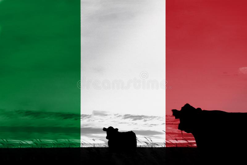 Consumption and production of cattle in countries with the flag of Italy.  royalty free stock photos