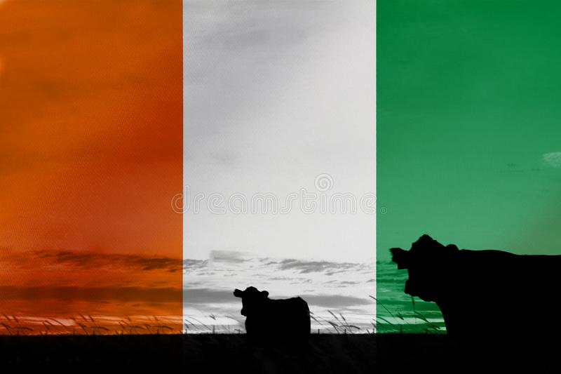 Consumption and production of cattle in countries with the flag of Ivory Coast.  stock image