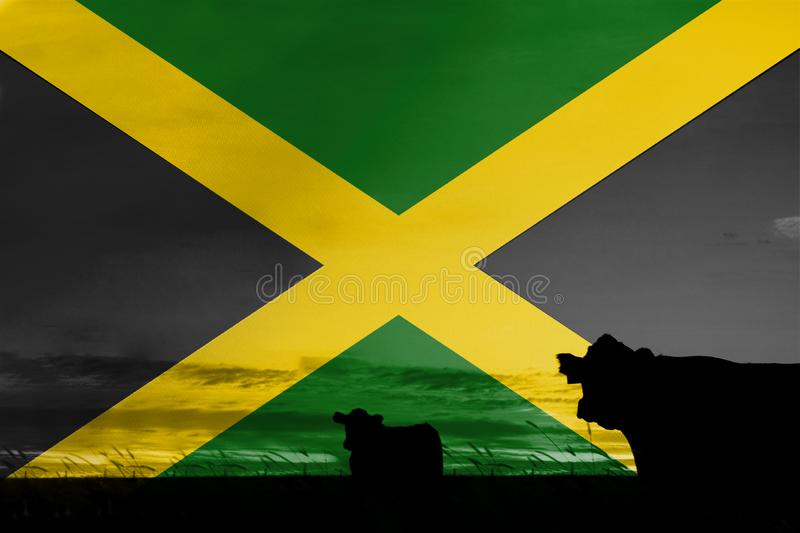 Consumption and production of cattle in countries with the flag of Jamaica.  royalty free illustration