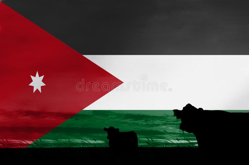 Consumption and production of cattle in countries with the flag of Jordan.  royalty free stock photo