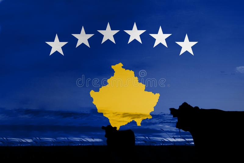 Consumption and production of cattle in countries with the flag of Kosovo.  stock photos