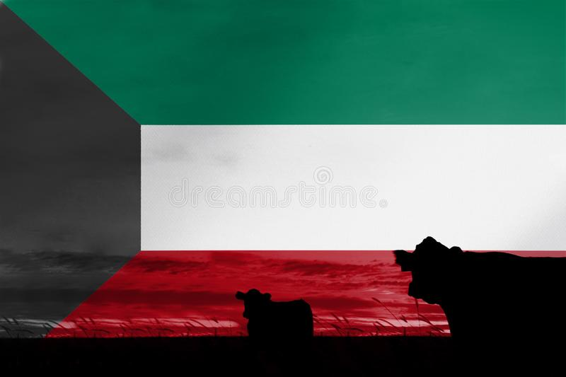 Consumption and production of cattle in countries with the flag of Kuwait.  royalty free stock images