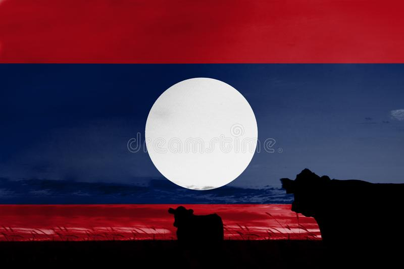 Consumption and production of cattle in countries with the flag of Laos.  royalty free stock photography