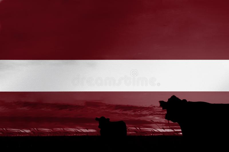 Consumption and production of cattle in countries with the flag of Latvia.  royalty free illustration