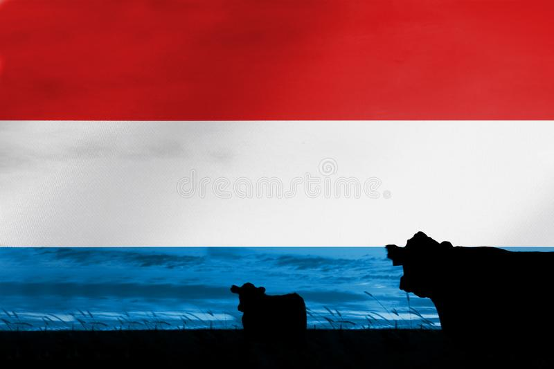 Consumption and production of cattle in countries with the flag of Luxembourg.  stock photos