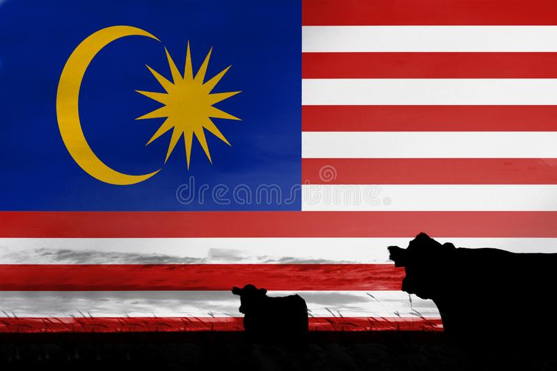 Consumption and production of cattle in countries with the flag of Malaysia.  stock illustration