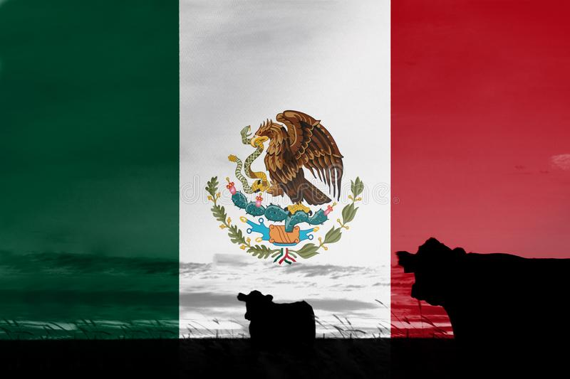 Consumption and production of cattle in countries with the flag of Mexico.  royalty free stock photos