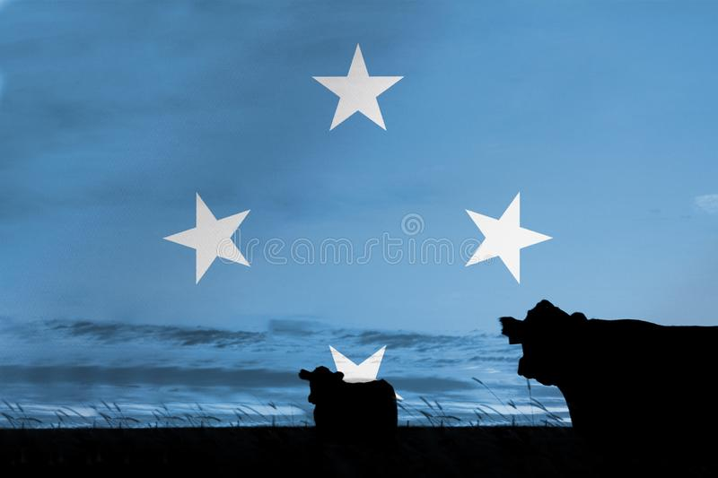 Consumption and production of cattle in countries with the flag of Micronesia.  vector illustration