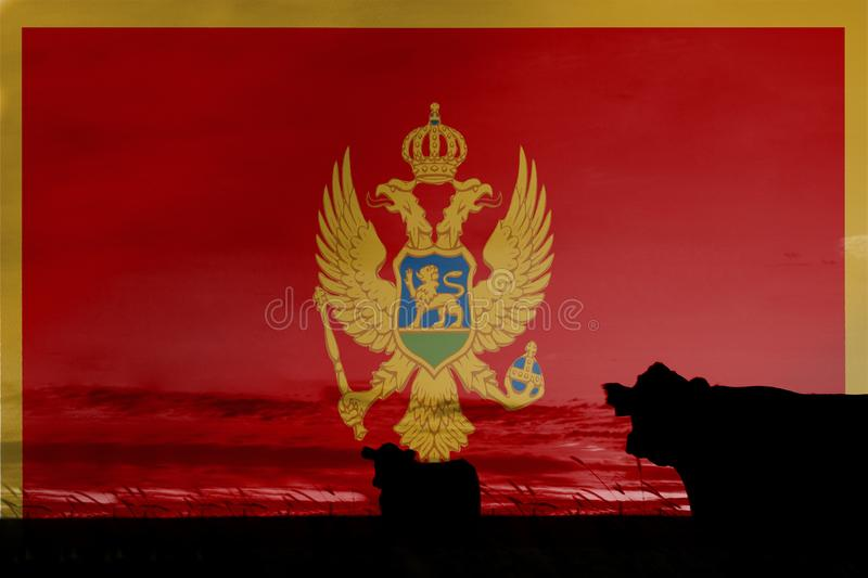 Consumption and production of cattle in countries with the flag of Montenegro.  royalty free stock image