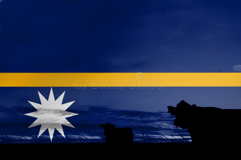 Consumption and production of cattle in countries with the flag of Nauru.  stock photos